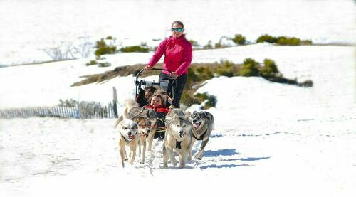 Cantal Mushing